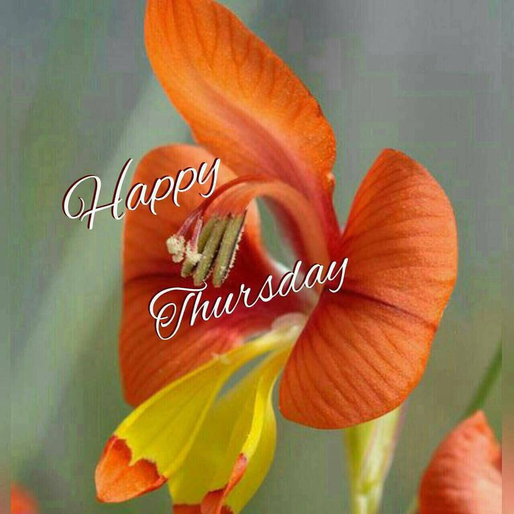 Good Morning Orange Flowers : Best images about happy thursday on pinterest posts