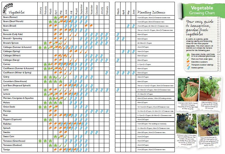 Vegetable growing chart i like this at a glance chart for Vegetable planting layout