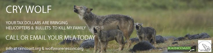We can't let the future become our past!  Please engage for western Canada's wolves...