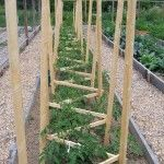 DIY Tomato Cage & Trellis - If you've ever struggled with a tomato cage or poles that couldn't support the size and weight of your tomato plants, this may be a great solution!
