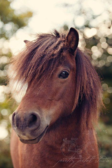 Kunst-Fotografie-Pferdefoto Brown Mini von PrettyPetalStudio, $ 8.00   – Pferde