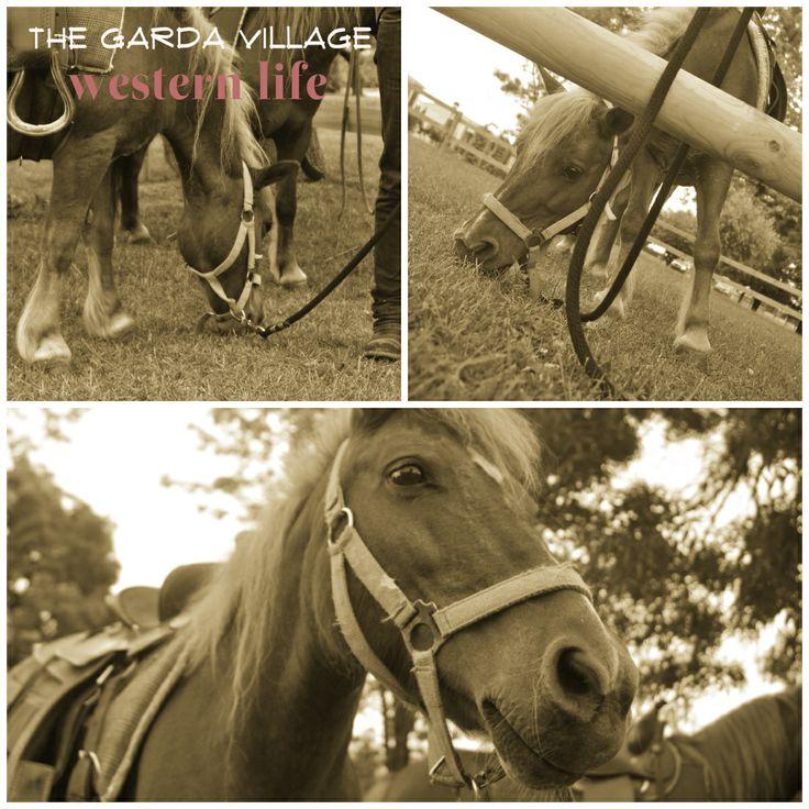 Animazione, pony, villaggio lago di Garda, Sirmione