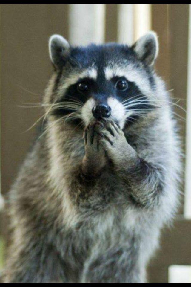 Mapache   Смешные фотографии животных, Милые детеныши ...