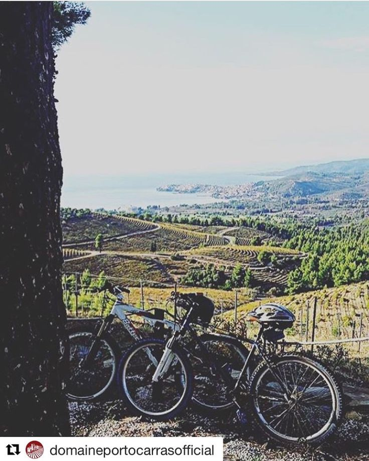 Discover the @portocarras resort with a bike ride and take a wine tasting break at @domaineportocarrasofficial • • •  #Repost @domaineportocarrasofficial  ・・・ Beautiful shot by @kolovos_panagiotis at our vineyards!  #drinkgreekwine #winelovers #naturelovers #bikingisfun #mountainbike #halkidikitravel #visitgreece