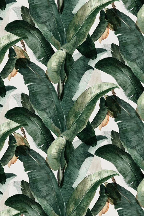 Banana Leaves hellocircus Botany, Nature inspiration