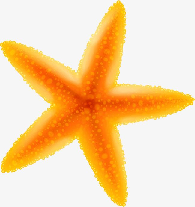 Yellow Cartoon Starfish Cartoon Starfish Starfish Cartoon Clip Art