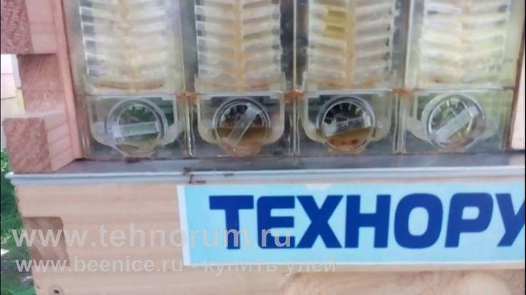 Улей из которого вытекает мёд. Тест в России. 7 часть