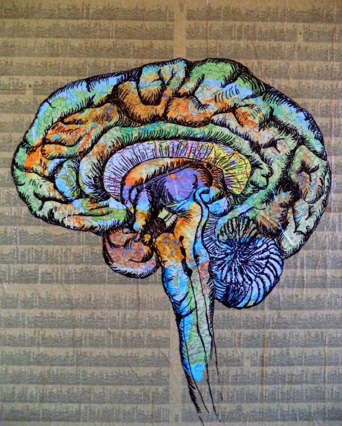 mapping the brain art print brain art and brain