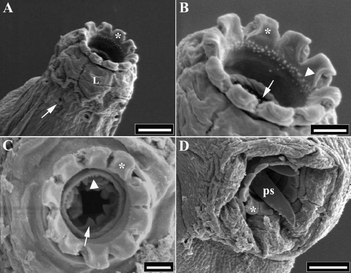 9 Best Tardigrade Water Bear Moss Piglet Superstar Images