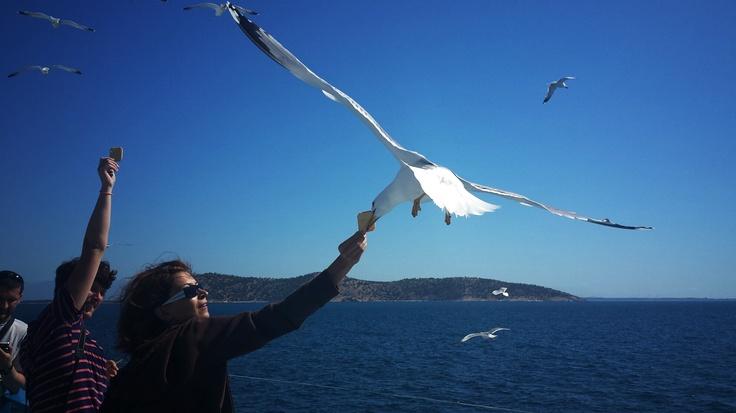 Seagulls saying hello :)