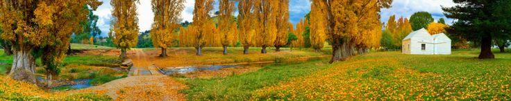 Ken Duncan - poplars in the countryside