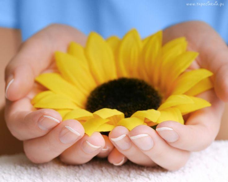 Dłonie, Żółty, Słonecznik