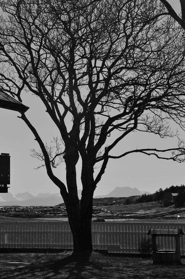 Lovund, Nordland, Norway. April 2014