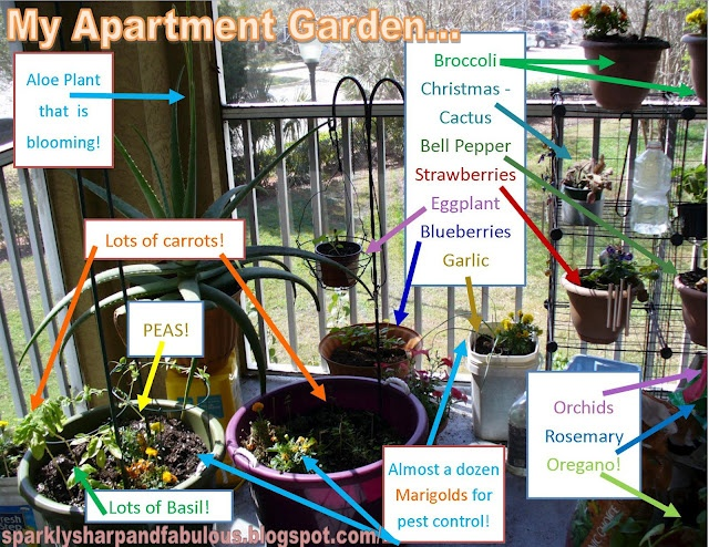 15+ different species of plants growing on an itty bitty apartment porch!