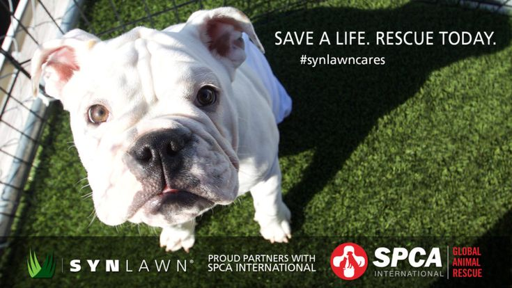 SynLawn is excited to announce a new partnershio with SPCA to help save lives! Rescue today! #synlawncares