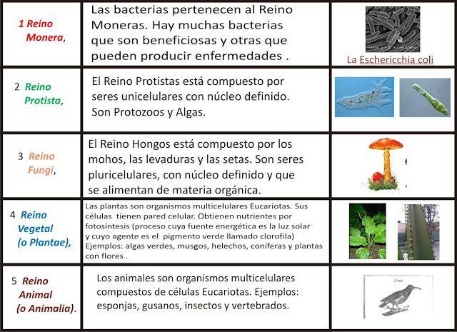 Resultado De Imagen De Reinos De Los Seres Vivos Reino De Los Hongos Descomposicion De Numeros Primaria Biología