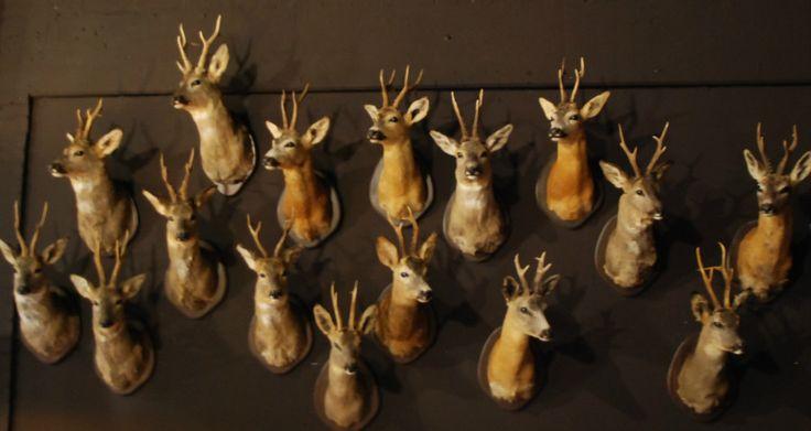 Opgezette dieren, jachttrofeeen, geweien, schedels, dierhuiden, zebrahuiden.
