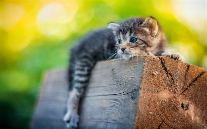 Download wallpapers small gray kitten, cute animals, pets, cats, wooden log