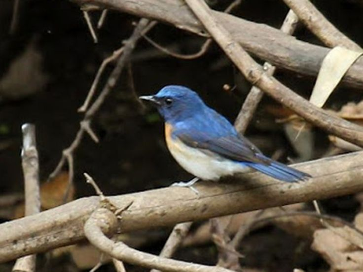 Lakhari Valley Sanctuary - in Odisha, India