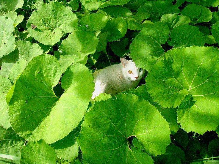 Hiding and Seeking    Misao the Big Mama and Fukumaru the Cat  Copyright © 伊原美代子/ Miyoko Ihara