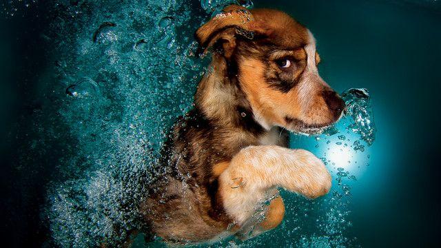 Sweeeet. Hunde-Babys unter Wasser – FFH.de