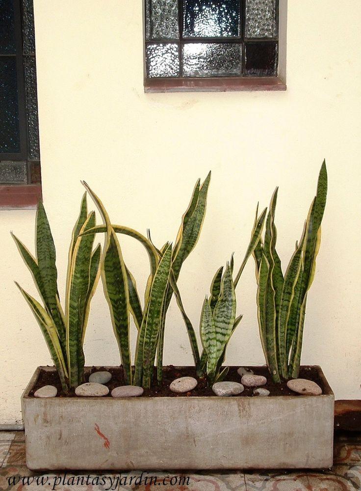 1000 ideas sobre plantas de poca luz en pinterest for Flores para interiores con poca luz
