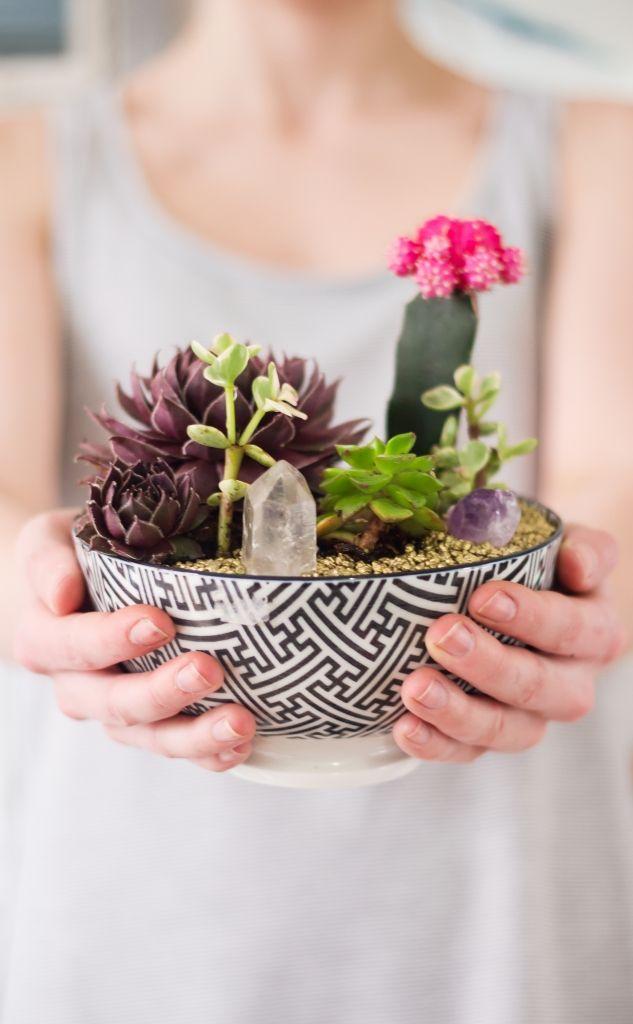 DIY succulent garden in a bowl