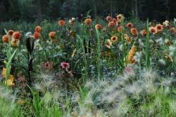 Kwekerij De Kleine Plantage - Tuinontwerpen  eenrum