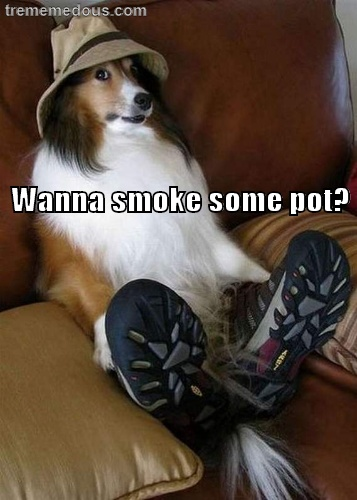 smoking dog trememedous meme funny lol hahaha