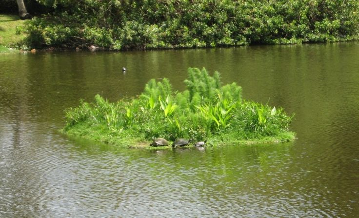 How To Make A Floating Island For Pond Google Search 640 x 480