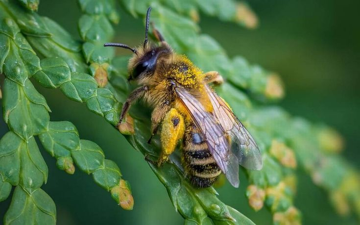 Garden #Tips: Bee decline has experts eying particular pesticides I am hoping that by then there will be new chemicals available to home gardeners to replace the neonicotinoids and still effectively control pests in the yard and garden. One new group of chemicals on the horizon are the anthranilic diamides. These low ... #pestcontroltips