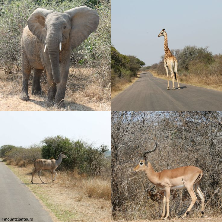 So Amazing being on holiday seeing wildlife in the Kruger Park with Mount Zion Tours and Travels.