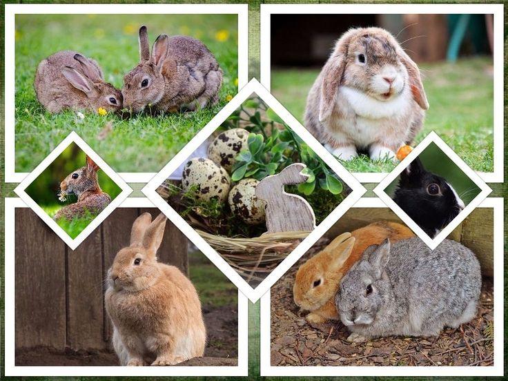 Professionelle Kaufberatung zum Thema Hasenkäfig und Freilaufgehege, sowie wertvolle Tipps zur artgerechten Haltung und Pflege von Kaninchen. Jetzt ansehen!