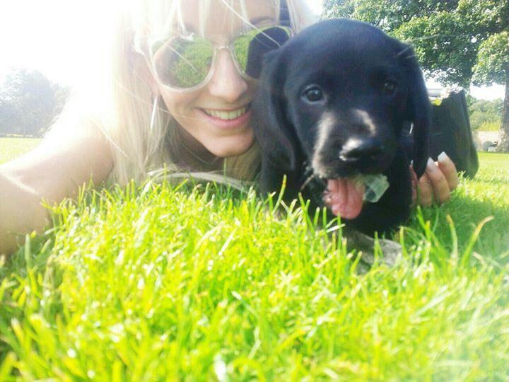 Kaiser our springador puppy and his big sis x