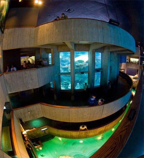 Boston aquarium - This place was huge, best aquarium I've ever seen