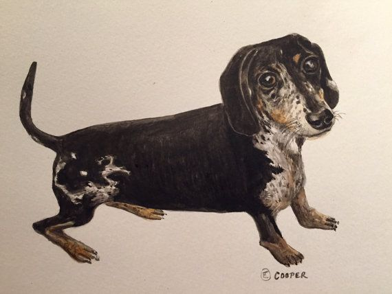 Original Paintings and drawings of your pets by by BlueshineArt