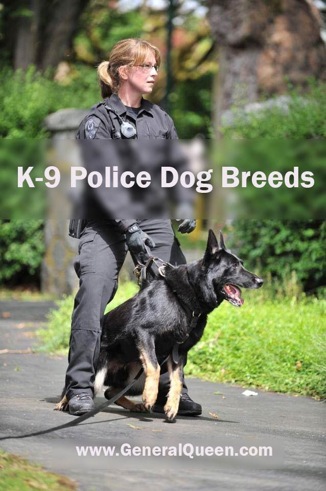 A Complete Guide On All Popular K 9 Police Dog Breeds Military