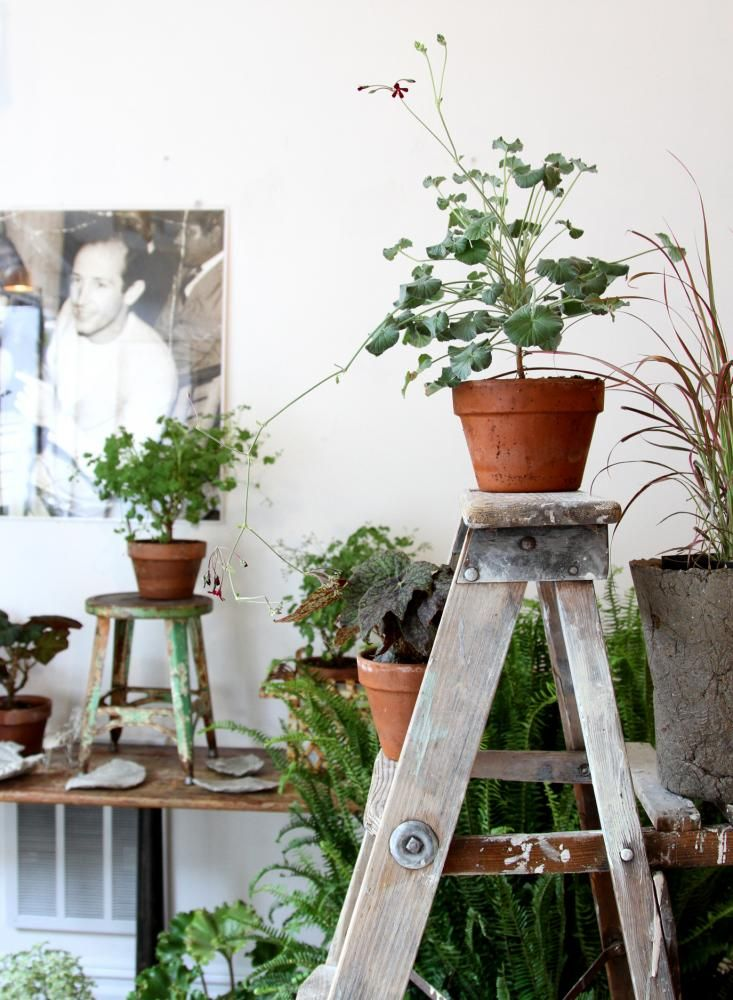 article-image from remodelista. Good use for antique ladder...charming display.
