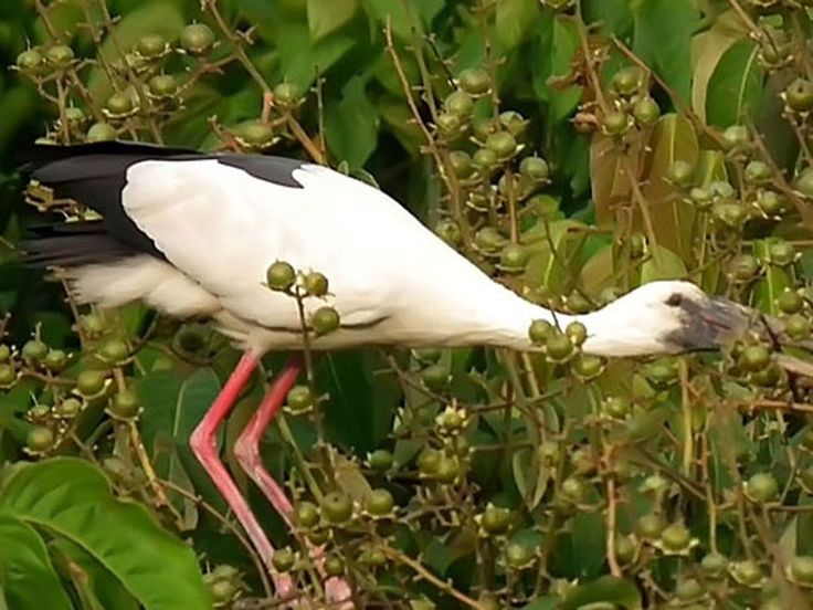 Raiganj Bird Sanctuary - in West Bengal, India