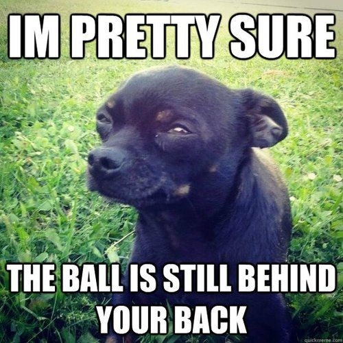 """im pretty sure the ball is still behind your back.."" #dogisgood hahah this is like DIG dog Jaxy :)"