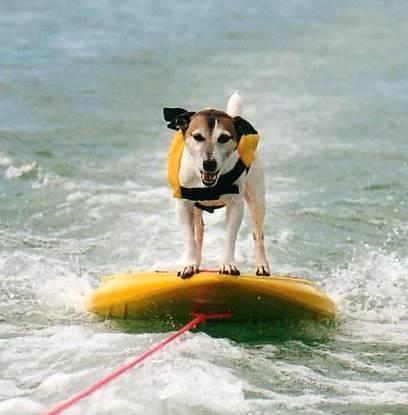 Jackee the Ski Dog!