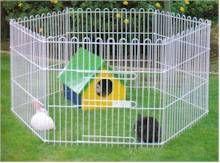 Conejos | Suelto por casa | Conejitos Enanos