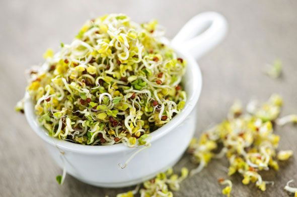 All About Sprouts
