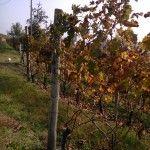 Fall shades at Francomondo Winery