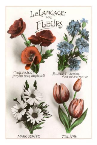 le langage des fleurs the language of flowers paris je t 39 aime pinterest language. Black Bedroom Furniture Sets. Home Design Ideas