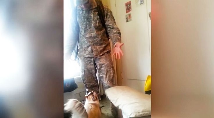 Country Music Lyrics - Quotes - Songs Viral content - Soldier Welcomed Home By Insanely Excited CAT Will Blow Your Mind - Youtube Music Videos https://countryrebel.com/blogs/videos/soldier-welcomed-home-by-insanely-excited-cat-will-blow-your-mind
