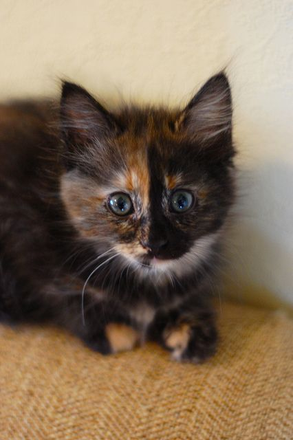 We used to have a kitty that looked a lot like this ~ she didn't meow ~ she only squeeked ~ thus the name ~ 'squeeky' ~ she was a nice kitty.