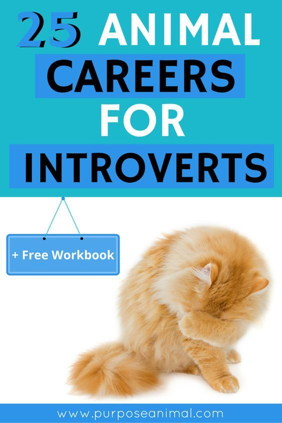 If You Are An Introverted Animal Lover You Are Going To Love This Post  Which Lists 25 Animal Careers For Introverts!