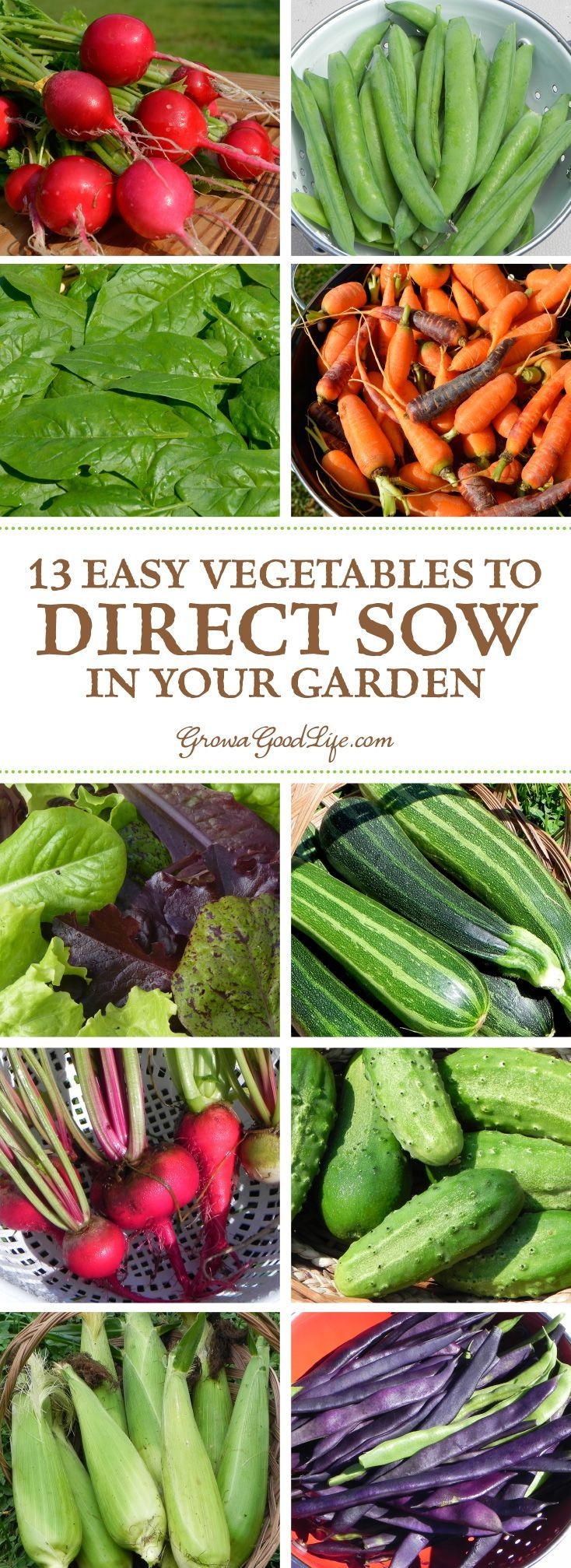 To Direct Sow Your Seeds Just Means Plant Outdoors In The Garden Where