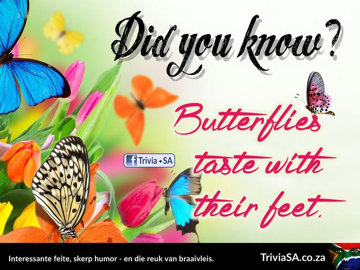 "Butterflies taste with their feet. (This ""did you know"" card was designed by AdSpark: http://adspark.co.za)"